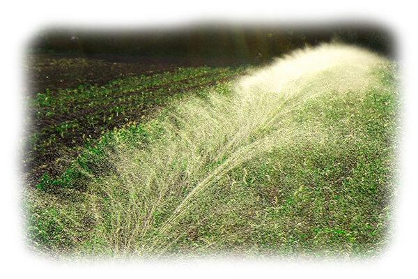 Капельный полив огорода недорого